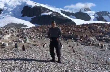 David Harbour de Stranger Things bailó con los pingüinos en la Antártica