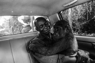 Revisa la imagen ganadora y las finalistas del concurso Fotógrafo de Vida Silvestre del Año