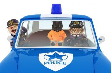 Atrapan a gato que ingresó celulares y cargadores a cárcel