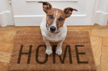Dueños de mascotas v/s comunidad: ¿Quién tiene la razón?