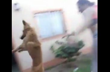 Adiós Chimuelo: Perro volador postula a viral del año