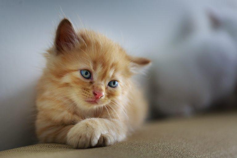 ¿Cómo un gato llegó a ser contratado en un bufete de abogados?