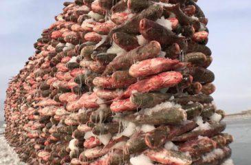 barricada de sardinas