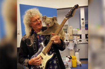 Brian May Koala Australia Guitarra