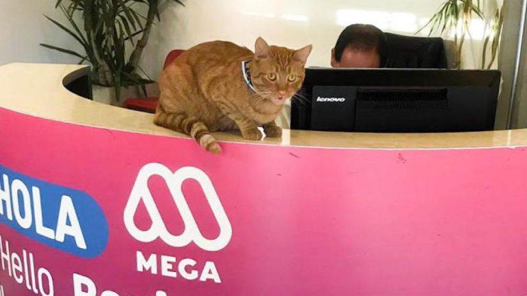 MEgato web