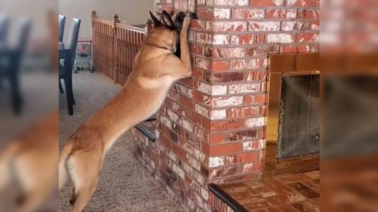 Perrito escondida web