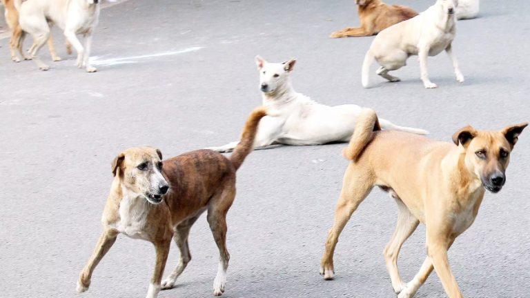 Perros callejeros envenenar mujer