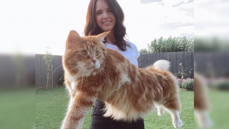 Gato gordo omar