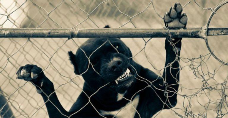 Dos perros de raza pitbull matan a un ladrón que intentaba robar en la casa de sus dueños