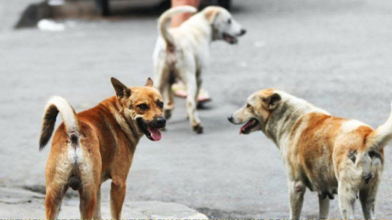 Adopción Perros cuarentena