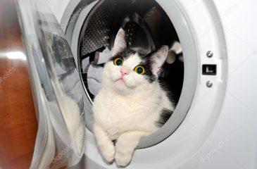 Gato lavadora web
