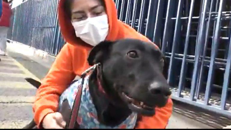 Delivery perritos callejeros