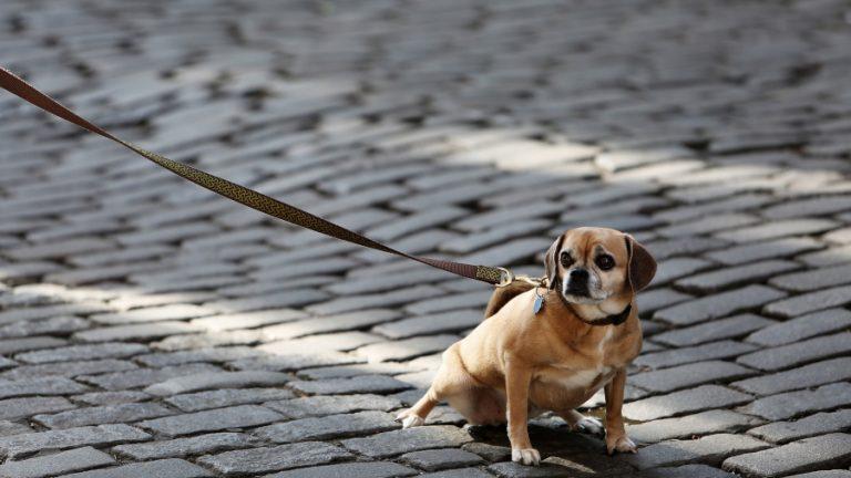 Perro hotel canino web