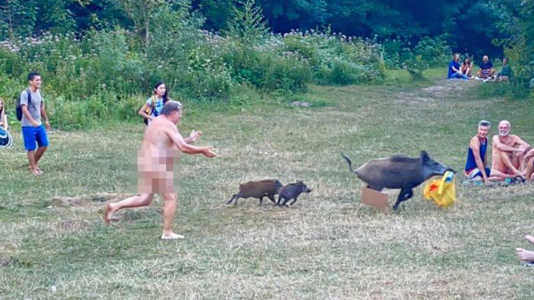 Hombre desnudo jabalí web