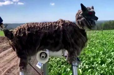 Lobo robot japón
