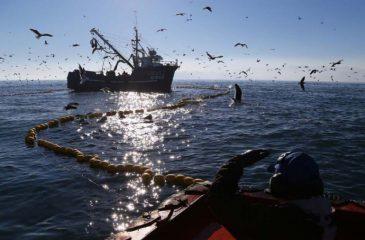 Ley de pesca barcos pesqueros web