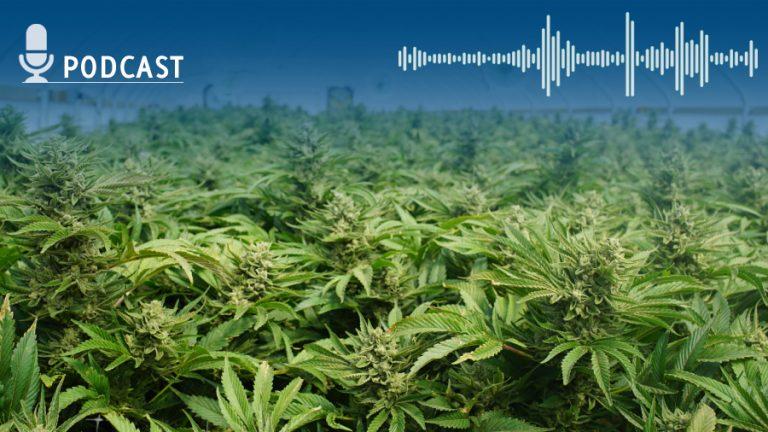 Msod marihuana narco