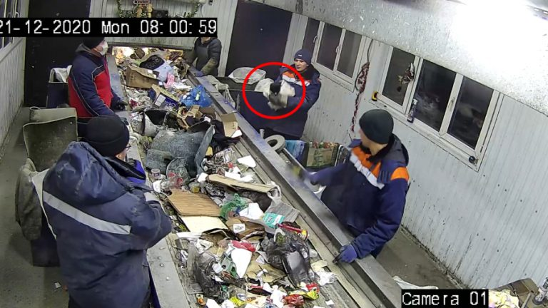 Hombre salva a gatito de la basura