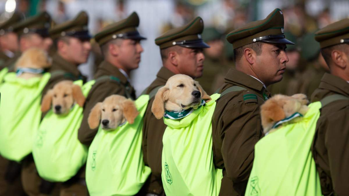 Parada Militar 4